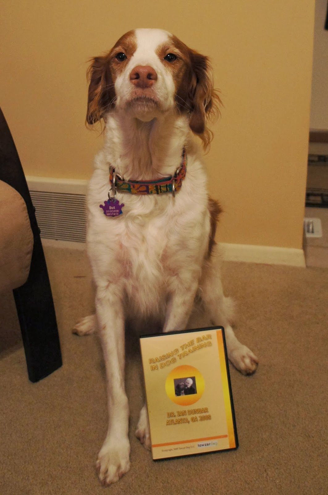 Dog Training Dvds For Sale