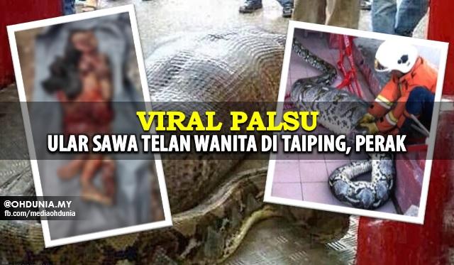 Viral Wanita Ditelan Ular Sawa, Pihak Bomba Keluarkan Kenyataan Mengejutkan!