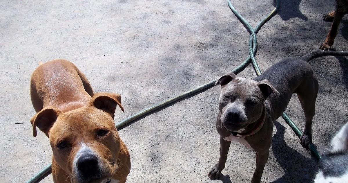 Halo Dry Dog Food Recalls