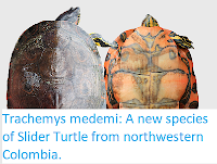 http://sciencythoughts.blogspot.co.uk/2017/12/trachemys-medemi-new-species-of-slider.html