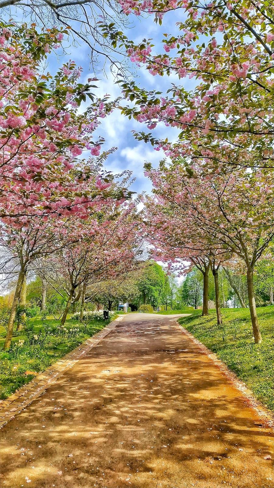 spring-in-paris