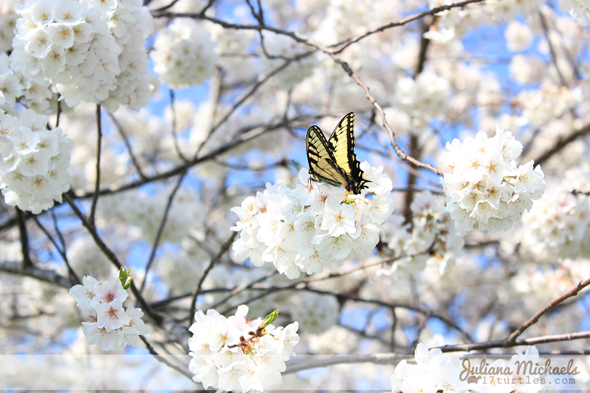 First Butterfly of Spring 2014