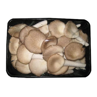 Osmanabad mushroom supplier mushroom training provider and