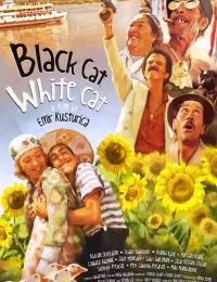 Black Cat, White Cat | Bmovies
