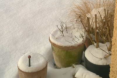 Gartentipps: Frühlingserwachen Im Garten, Auf Balkon Und Terrasse Gartentipps Winter Beachten