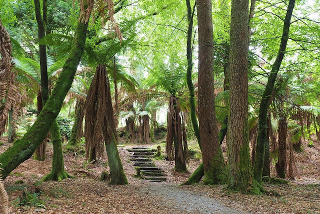 metsäreitti, Kells Bay Gardens, portaat, Irlanti