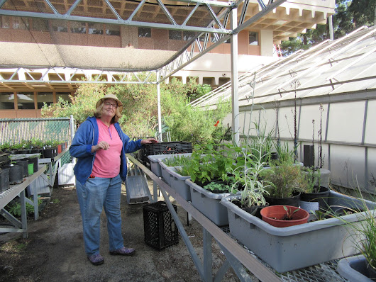 Native Plant Sale - End of Season Sale