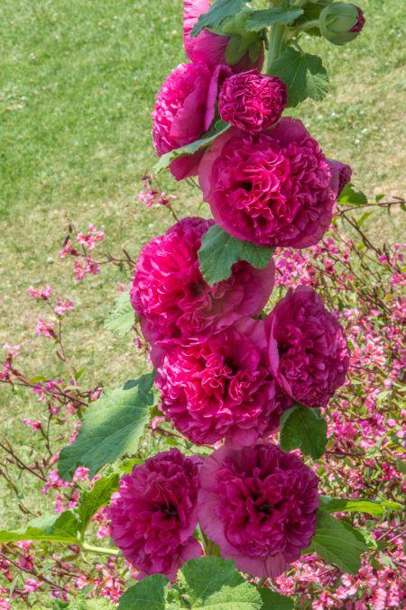 Beautiful Blooming flowers inside Pari Mahal.