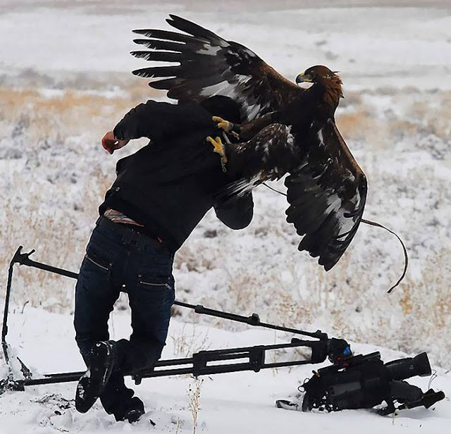 Crazy Photographers Eagle Fight