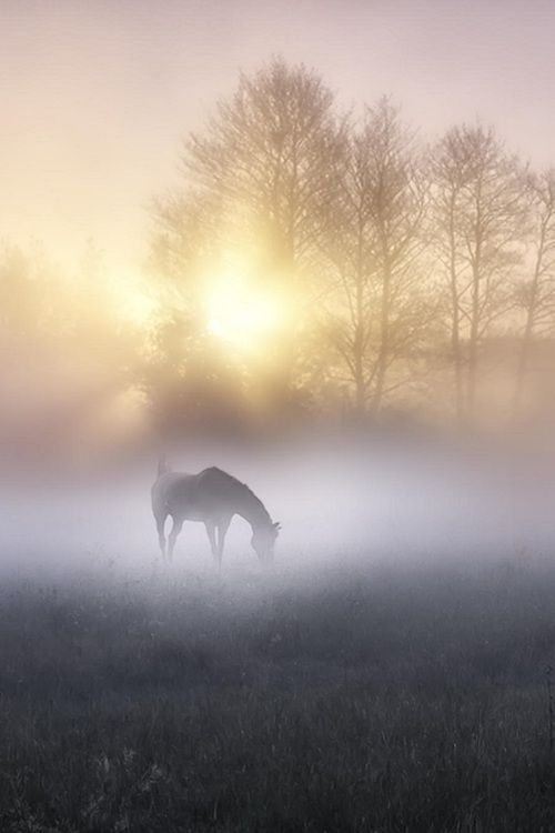 A horse in the mist