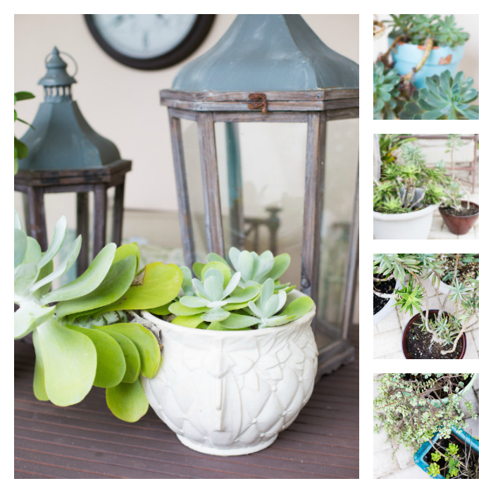 20 Beautiful Succulent Planter Arrangements-shabbyfufu.com