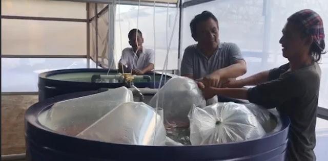 Nyinyiran Andi Arief: Kecebong Nyungsep di Bawah 50 Persen Diganti Ikan Nila