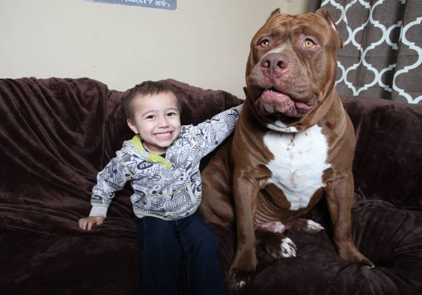 Owner Marlon Grannon trusts Hulk with his 3-year-old son,Jordan-1