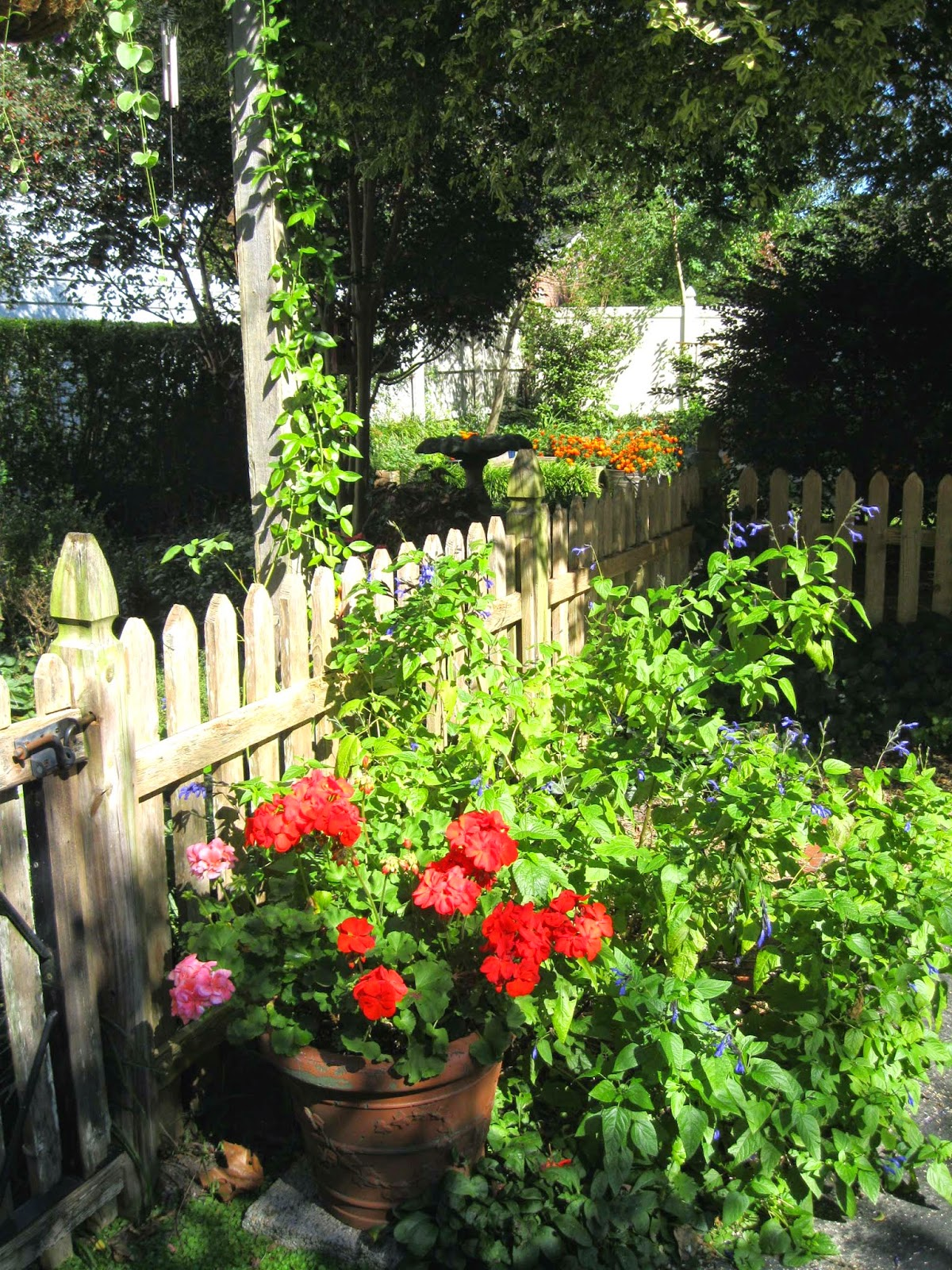 Donna's Art At Mourning Dove Cottage: The Fall Garden