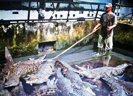 Asam Kumbang Crocodile Garden