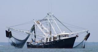 kapal trawl