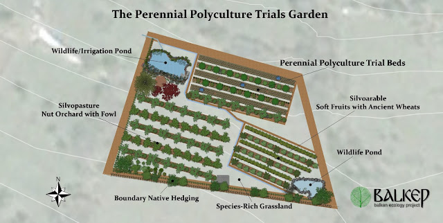 Perennial_polycultures_permaculture_agro