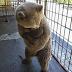 Άνθρωποι νομίζουν ότι καταγράφουν στην κάμερα μια Αρκουδίτσα που παίζει! ΑΥΤΟ όμως που κάνει στην πραγματικότητα; ΦΡΙΚΗ!