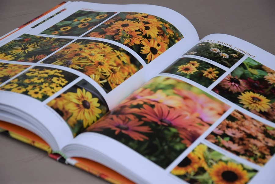 plantas de flor en tonos amarillos