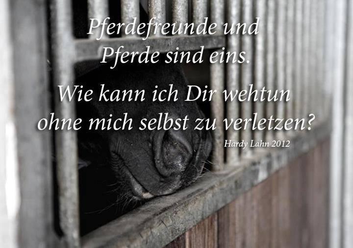 Es Erschliesst Sich Mir Nicht Wildpferde In Ein Von Hauspferden Völlig  überlaufendes Land Zu Fliegen Wo Ein, Für Mich Artgerechter Erhalt Von  Einheimischen ...