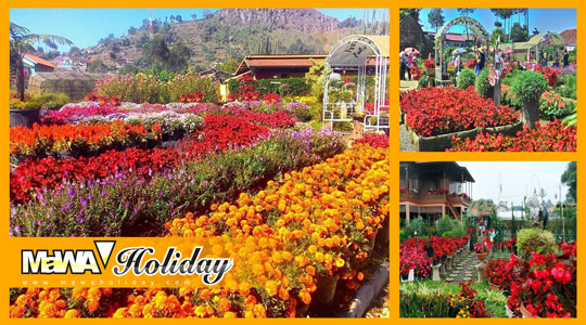 Tempat wisata romantis taman bunga begonia