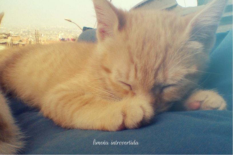 Gatito bebé durmiendo