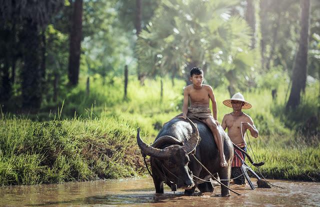 Gambar yang hidup di Asia Tenggara