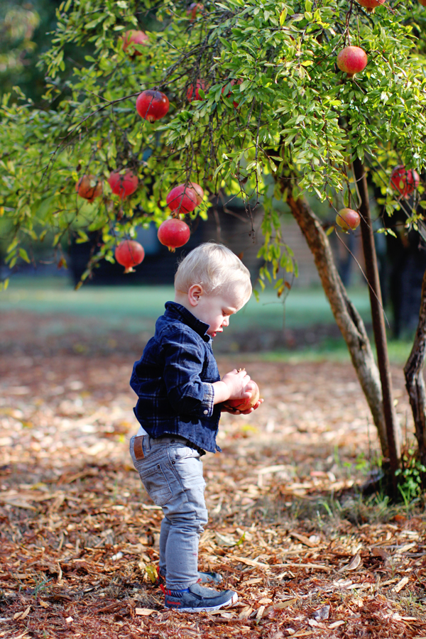 Baby picking pomegranates