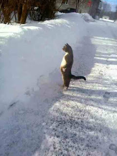 Cat walking in winter
