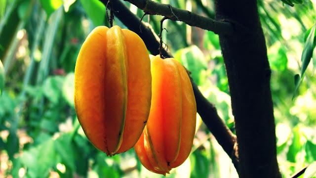 Star Fruit Benefits