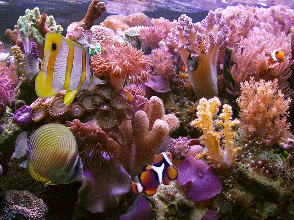 coral reef wallpaper widescreen |Sea and Sunset