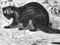 5 Fakta tentang Kopi Luwak Asli pada Masa Kolonial