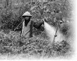Dampak Negatif Penggunaan Pestisida