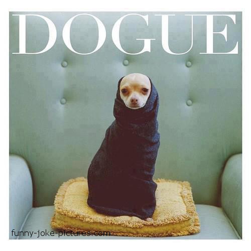 Funny Vogue Dog Joke Image