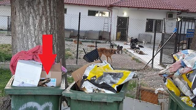 Σκύλος Σέρρες Κυνοκομείο