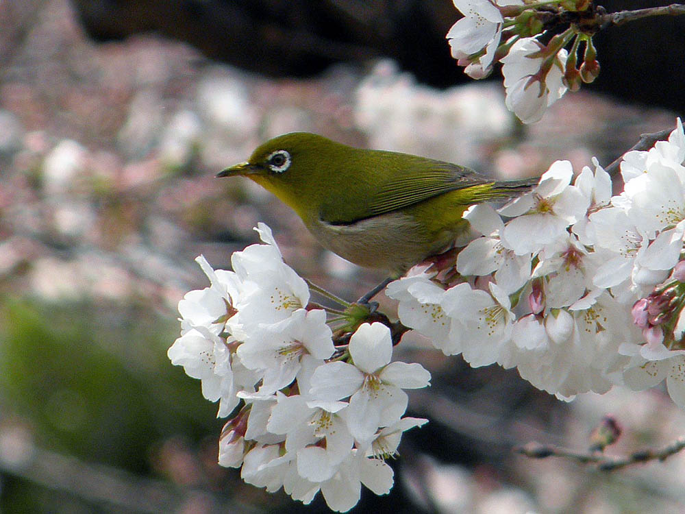 Birds And Nature Photography Raub From Japan