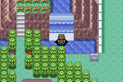pokemon emerald kaizo screenshot 5