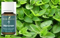 13 Incredible Health Benefits of Marjoram Essential Oil