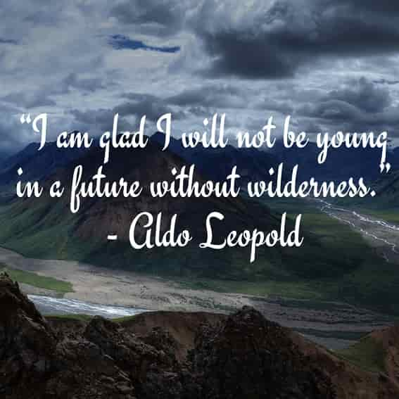 i am glad i will not be young in a future without wilderness