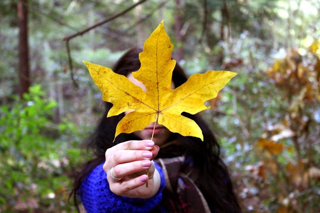 Autumn at Glen Oaks log cabin hotel, Big Sur California - luxury travel blog