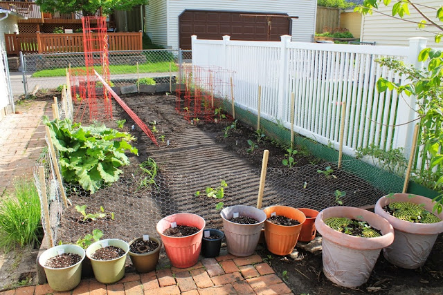 The planted garden, including herbs and strawberries in pots.