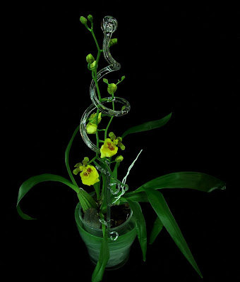 flowering oncidium
