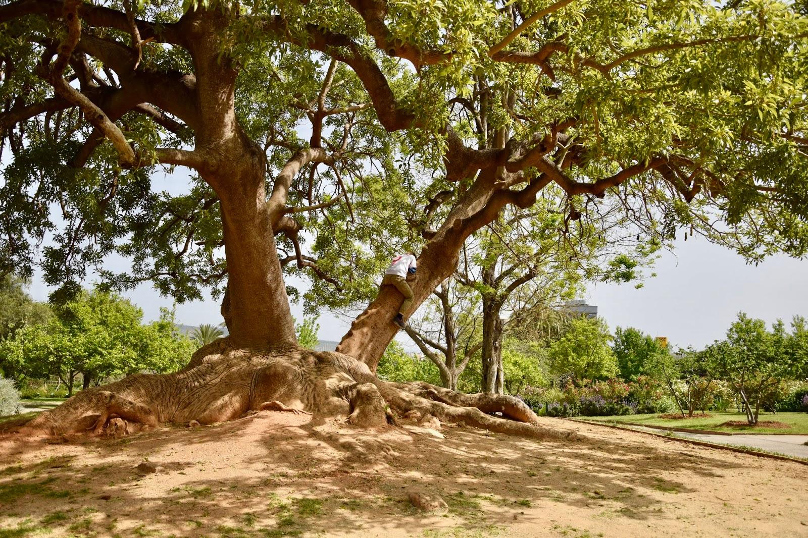 Park Cervantesa