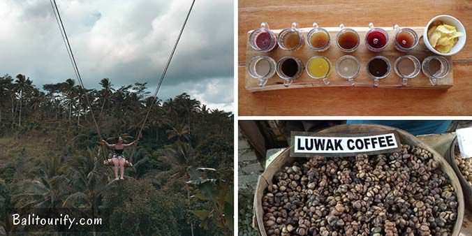 Tea - Luwak Coffee Tasting & The Swing, One Day Bali Waterfalls and Kintamani Volcano Tour