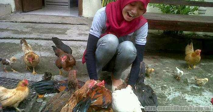 Gambar Ayam Kampung Organik