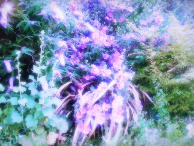 a purple wild garden