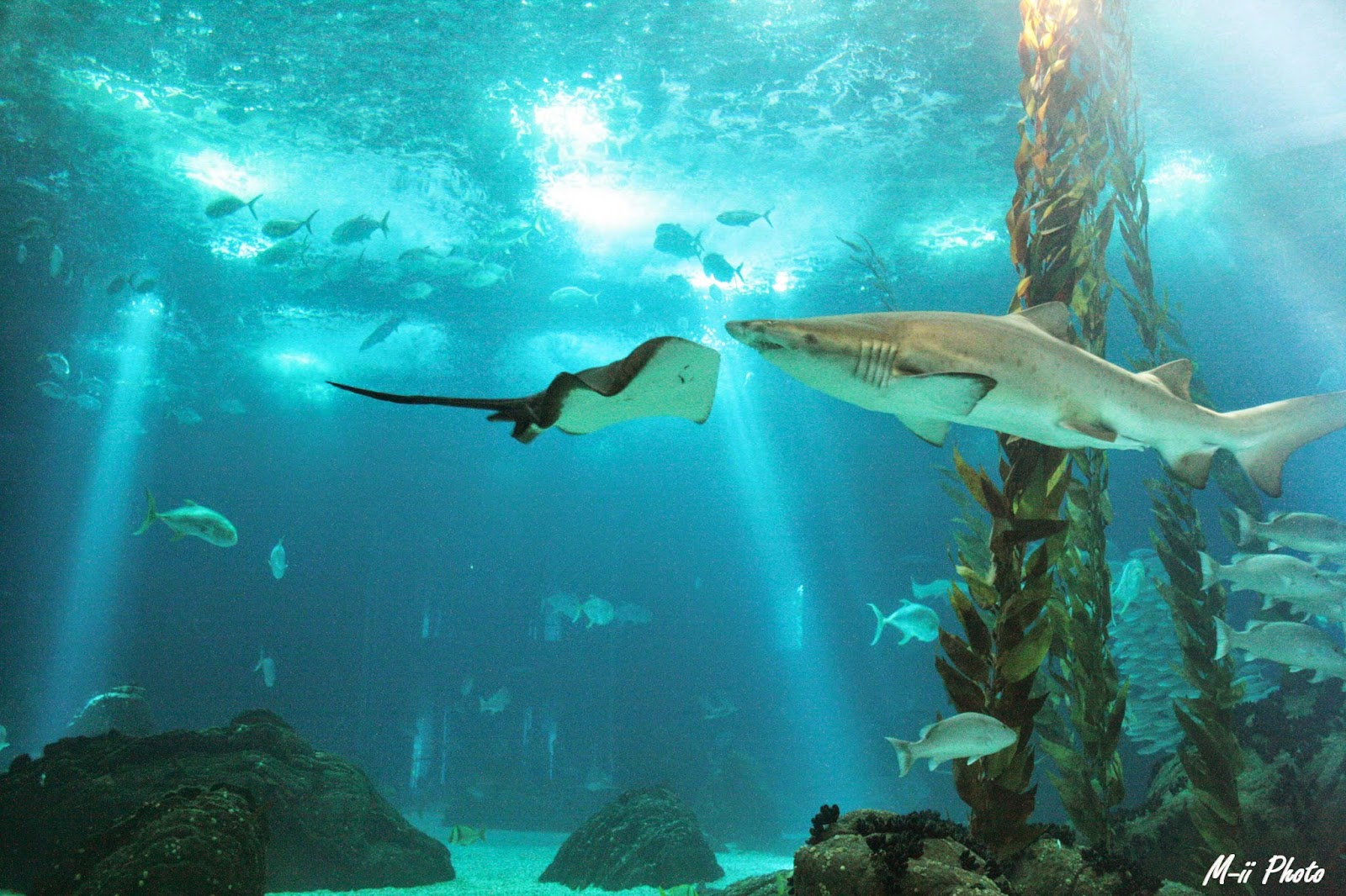 M-ii Photo : 10 choses à faire à Lisbonne Aquarium de Lisbonne