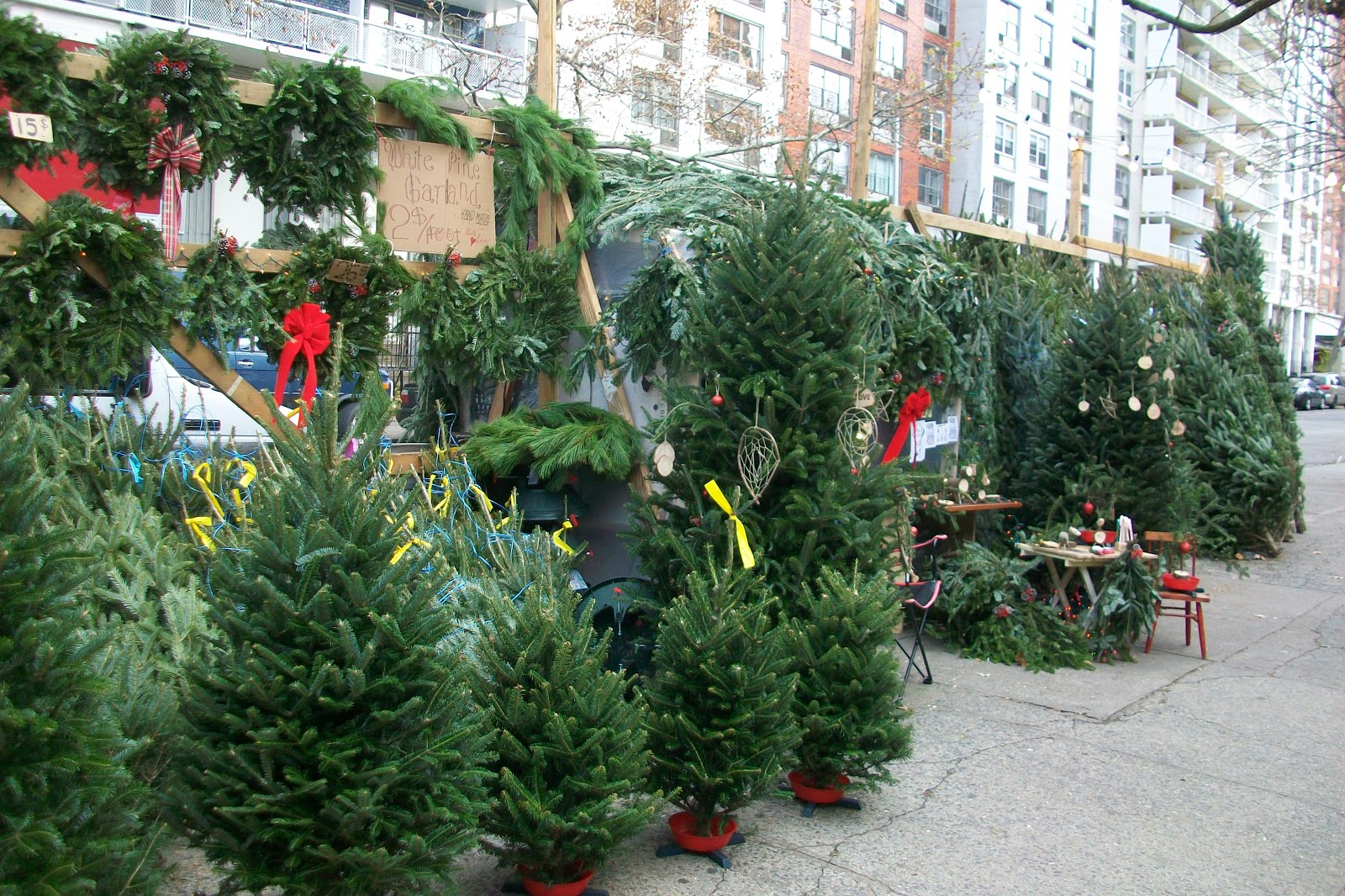 Local Ecologist: 4 Christmas Tree Stories