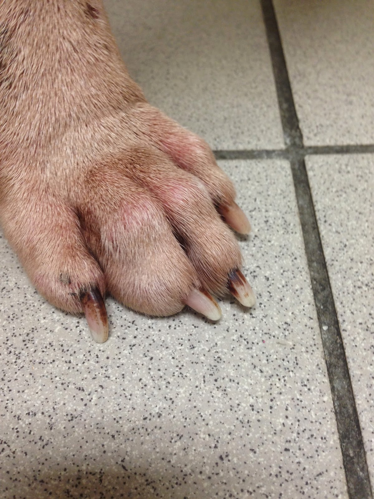 Diary of a Real-Life Veterinarian: Understanding and Diagnosing The ...