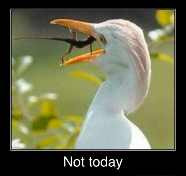 Funny Egret Lizard Not Today Meme Joke Picture